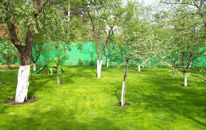 Все о тенелюбивых плодовых деревьях и кустарниках: какие деревья ...