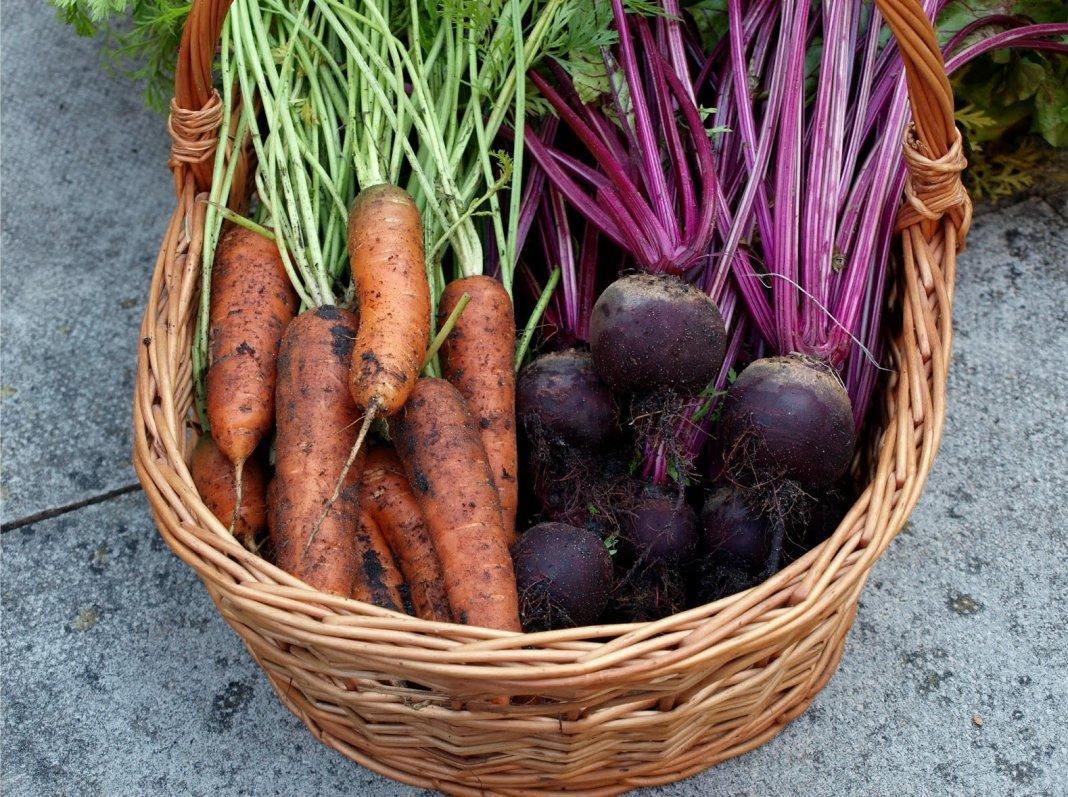 Что сажать после моркови. После чего сажать морковь»