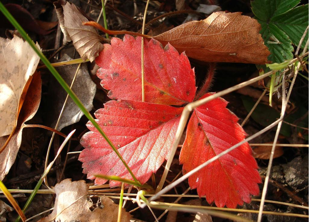 Почему краснеют листья у ревеня болезни и вредители и меры борьбы с ними