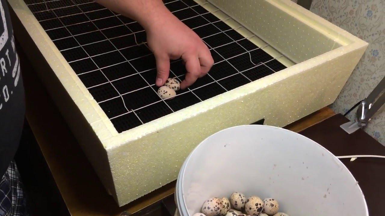 Инкубатор Золушка на 28, 45, 70, 98: инструкция по эксплуатации, обзор, плюсы и минусы
