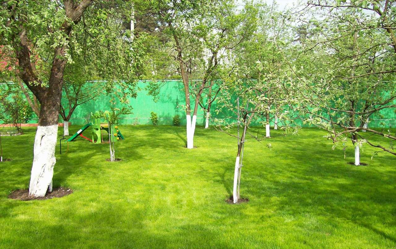 Как можно сажать деревья на садовом участке