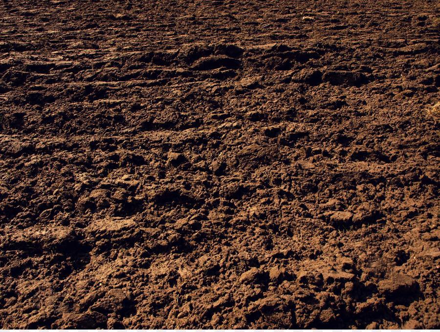 Томат Розамарин F1: отзывы, характеристика и описание сорта, фото, урожайность
