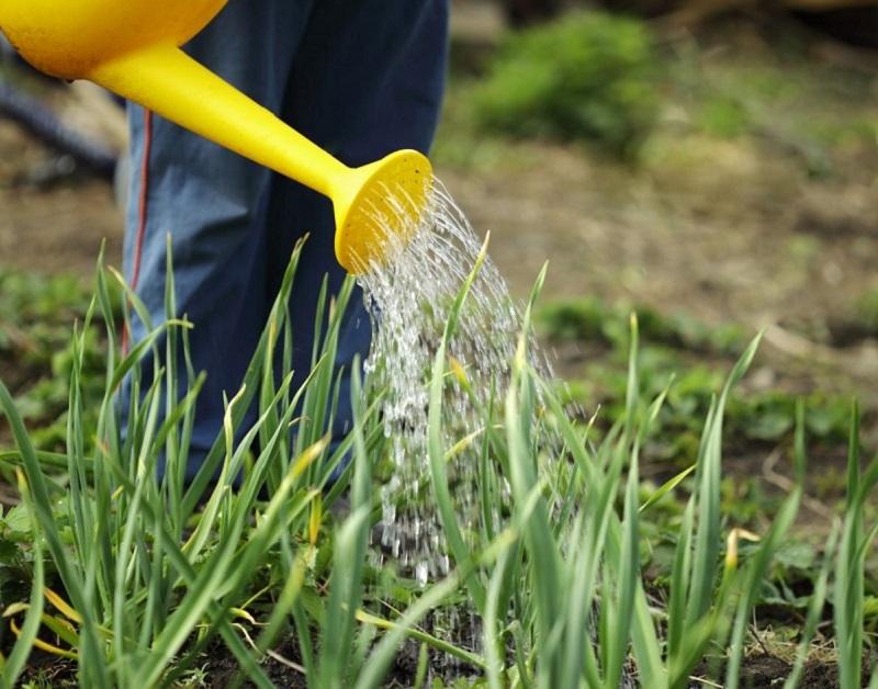 Весенняя посадка лука севка — сроки и правила высадки луковиц