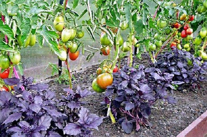 Какие овощи можно сажать в одной теплице
