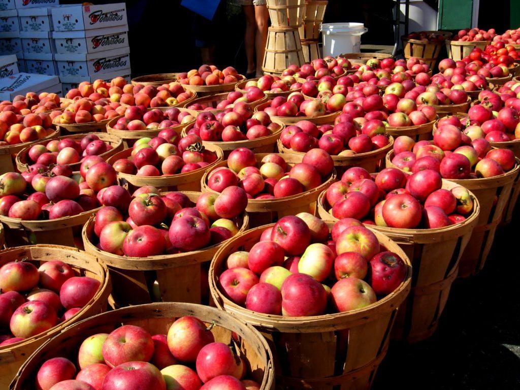 Отслаивается кора на яблоне как лечить