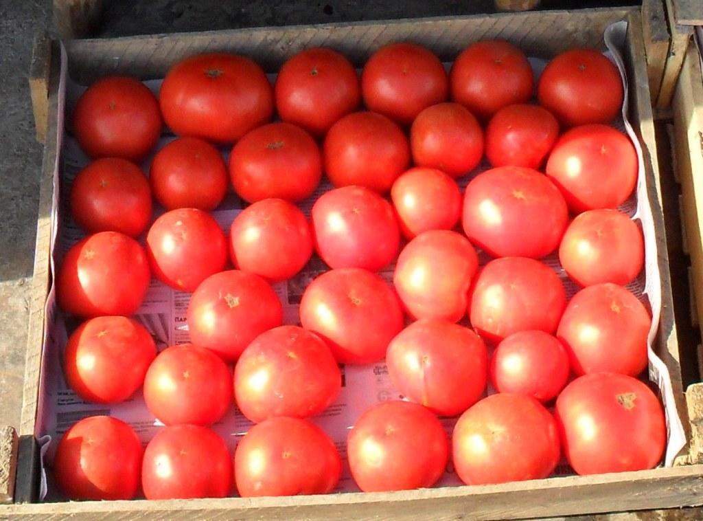 Томат Картофельный малиновый: характеристика и описание сорта с фото