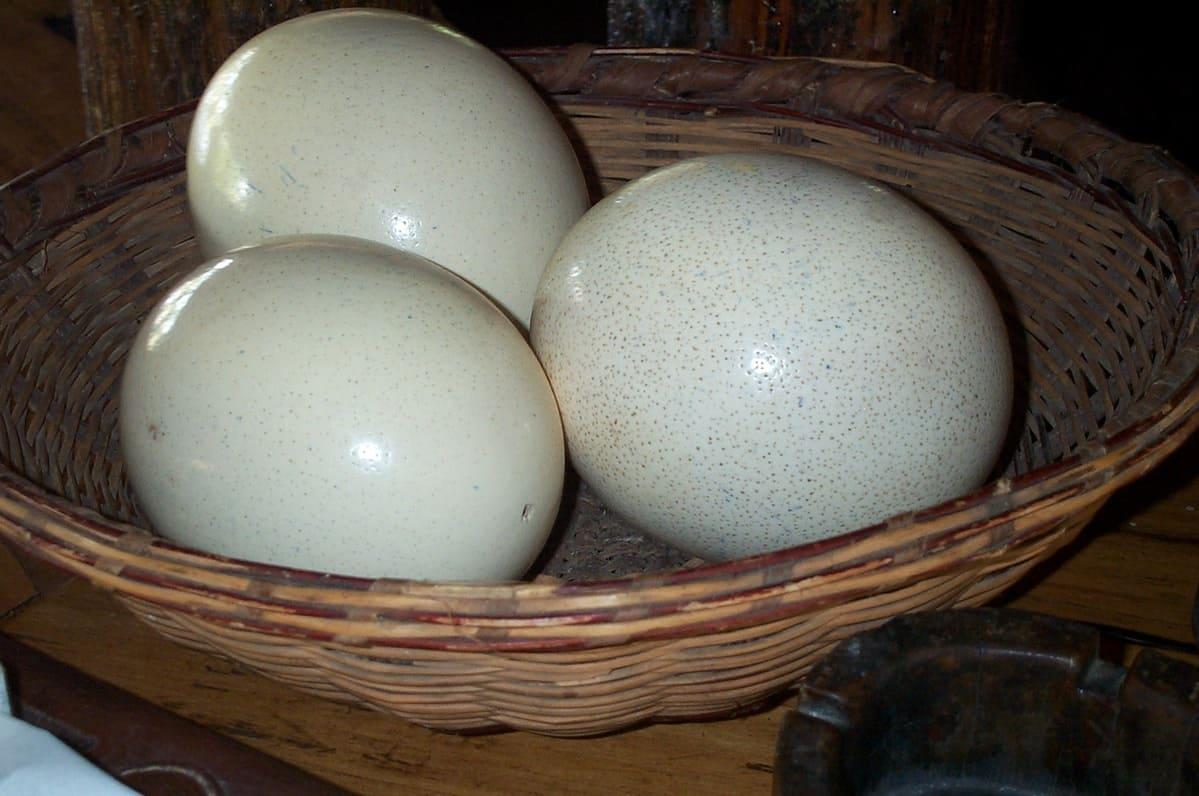 Картинки страусиных яиц, картинки