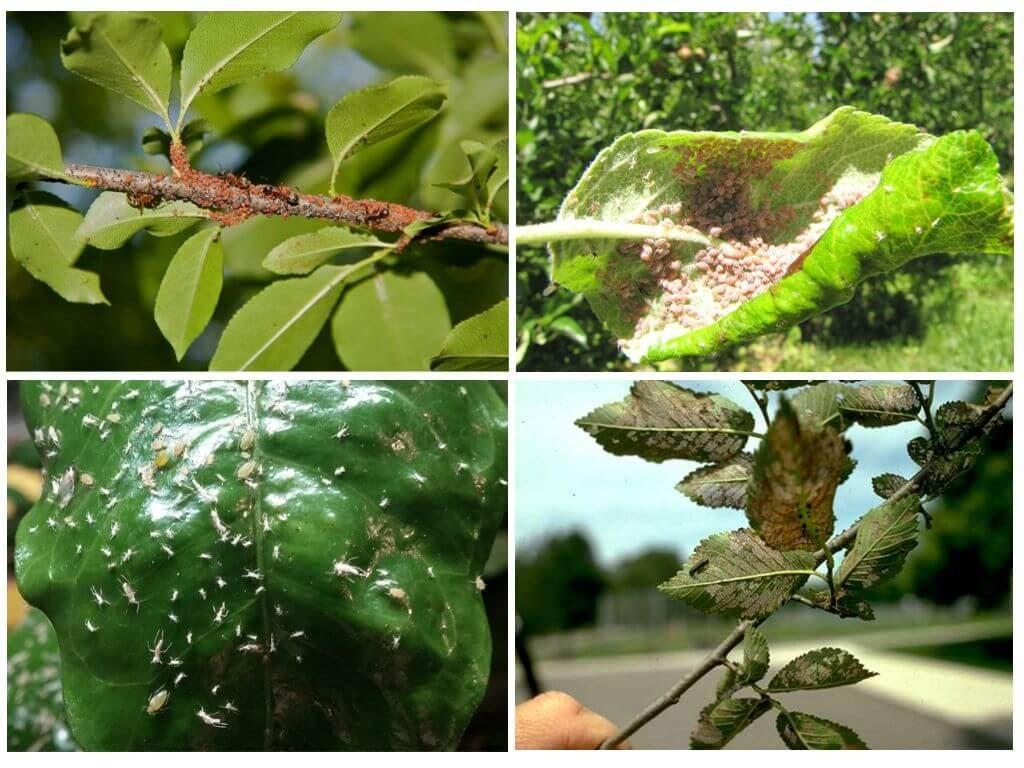Препараты от тли на плодовых деревьях эффективные химические