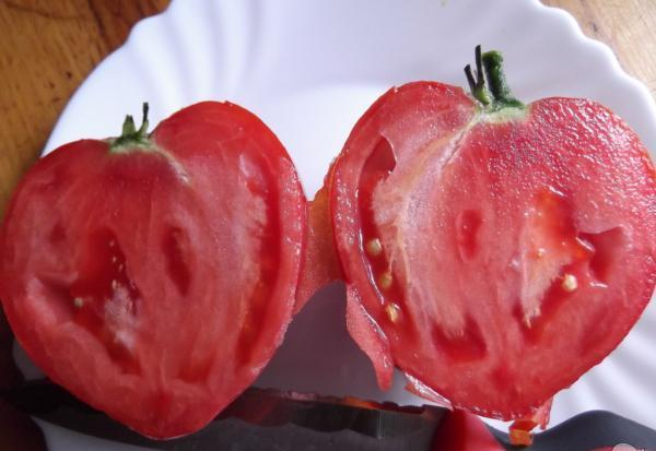 Бычье сердце гигант томат