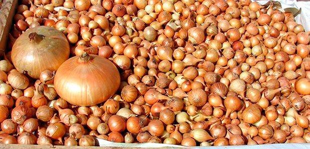 Как сохранить лук севок до весны