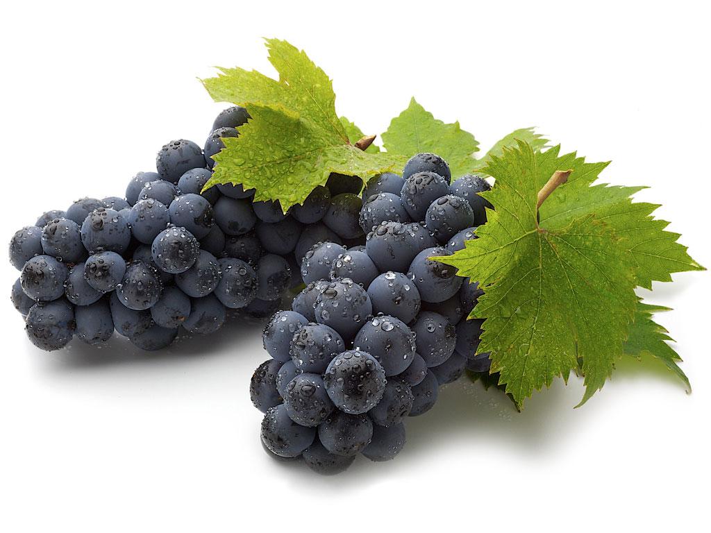 Из какого винограда делают белое вино