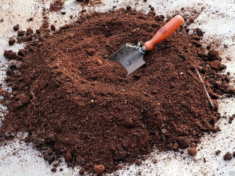Когда и как правильно пересадить абрикос на новое место и правила ухода за деревом