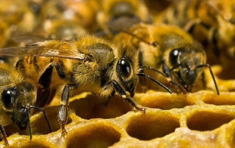 Самая легкая подкормка пчел весной сахарным сиропом в пакетах