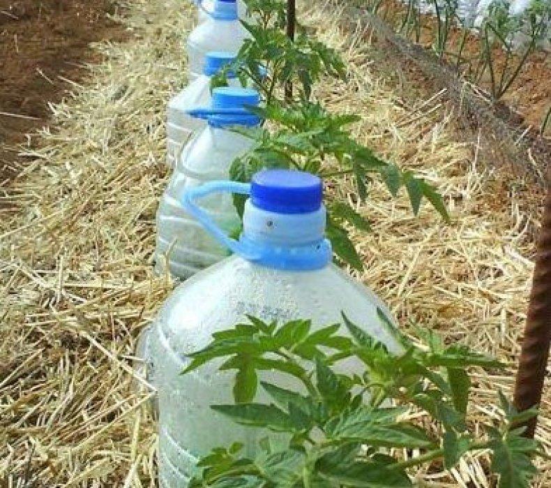 Как сделать капельный полив из пластиковых бутылок для комнатных растений?