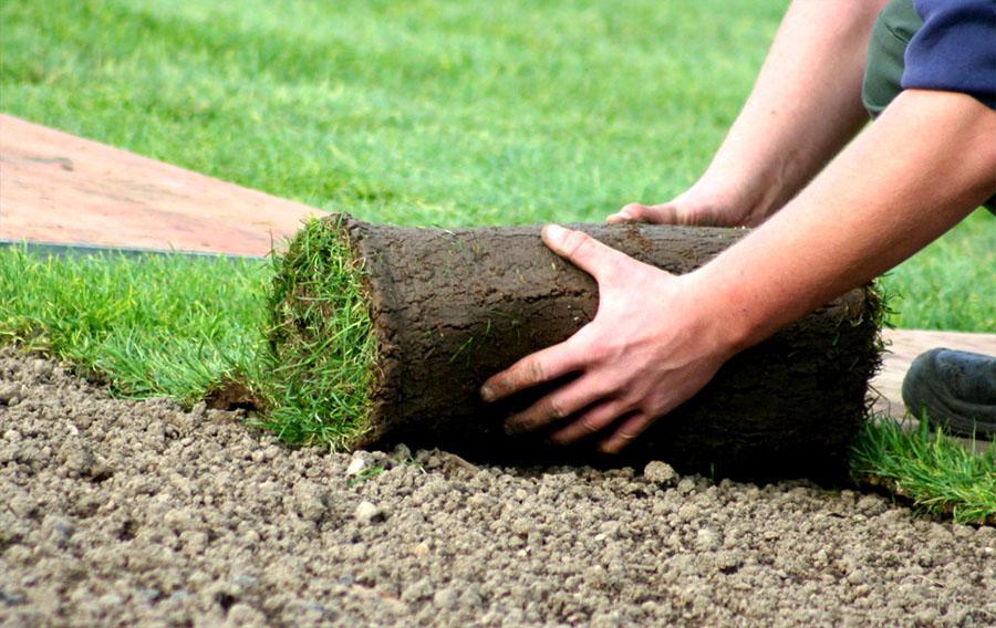 Как правильно посадить и вырастить газон на даче своими руками: правила, условия