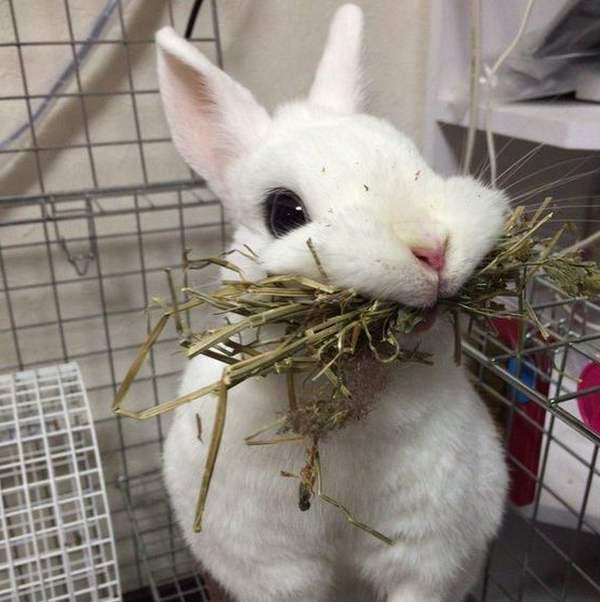 Как сделать клетки для кроликов своими руками: все размеры, фото, чертежи