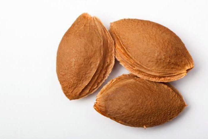 Как посадить абрикос из косточки и когда он будет плодоносить