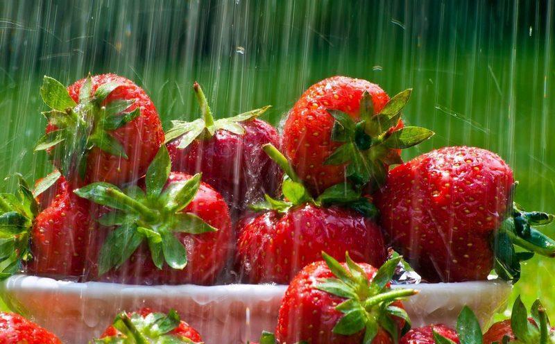Как часто поливать клубнику в открытом грунте
