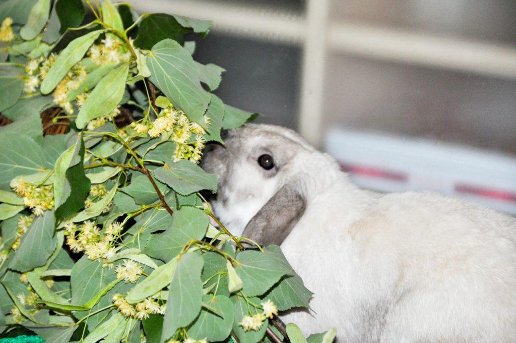 Чем кормят кролика: что едят и что любят, что можно давать и как правильно