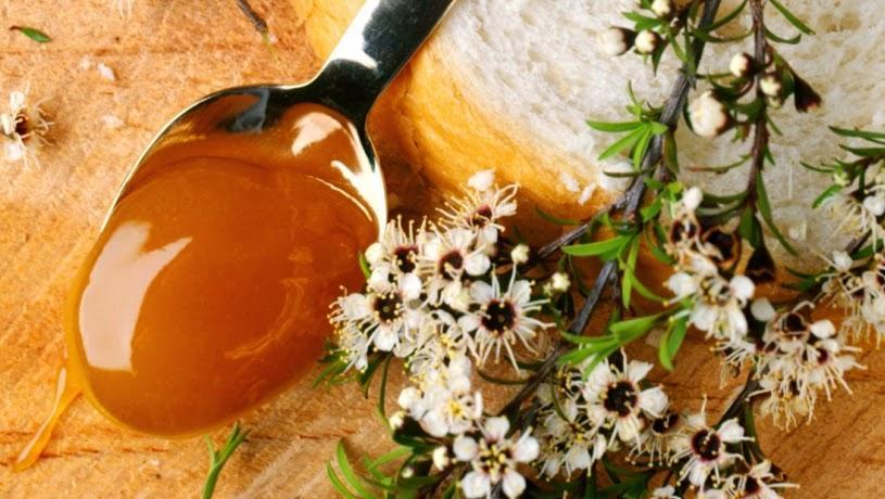 Полезные для здоровья свойства и способы применения меда манука - Блог