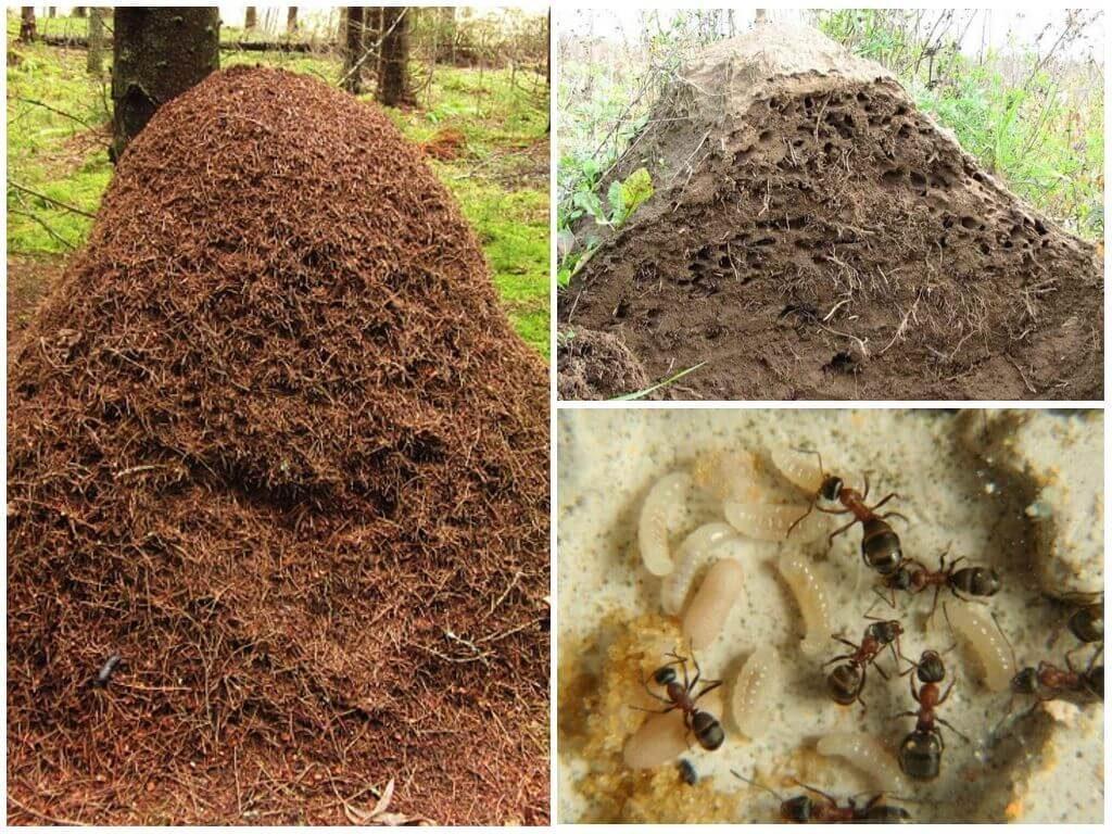 Средство от муравьев муравьед