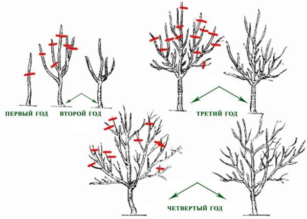 Плодовые деревья китая