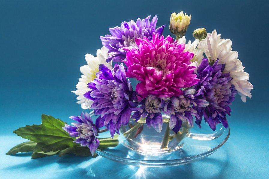 Как сохранить срезанные хризантемы в вазе - советы видео