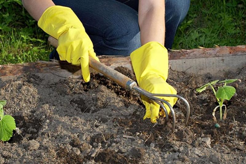 Как бороться с травой в огороде народными средствами: как быстро избавиться