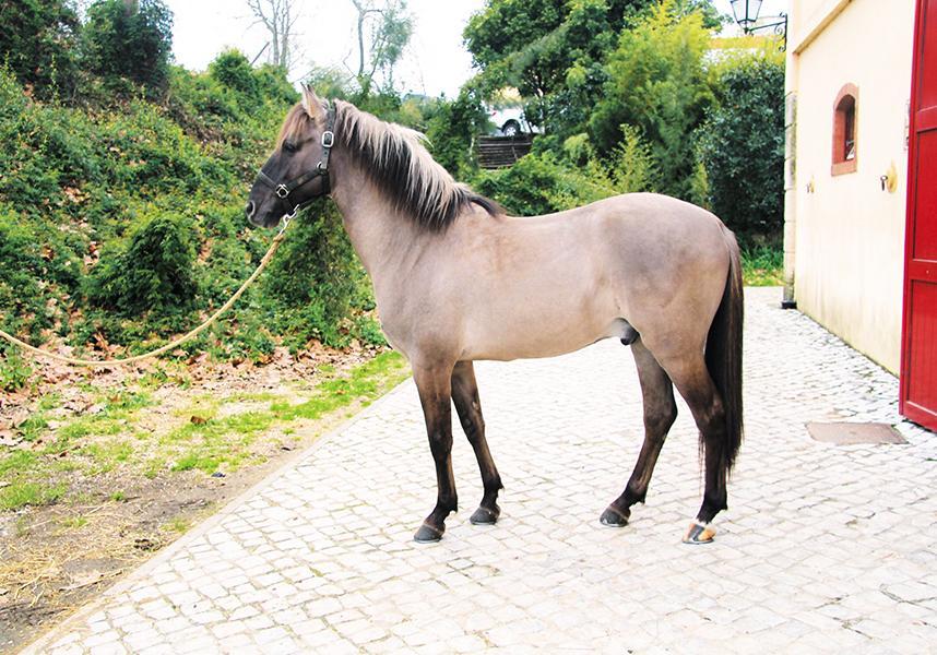Самые красивые лошади в мире. Красивые породы лошадей ( ФОТО)