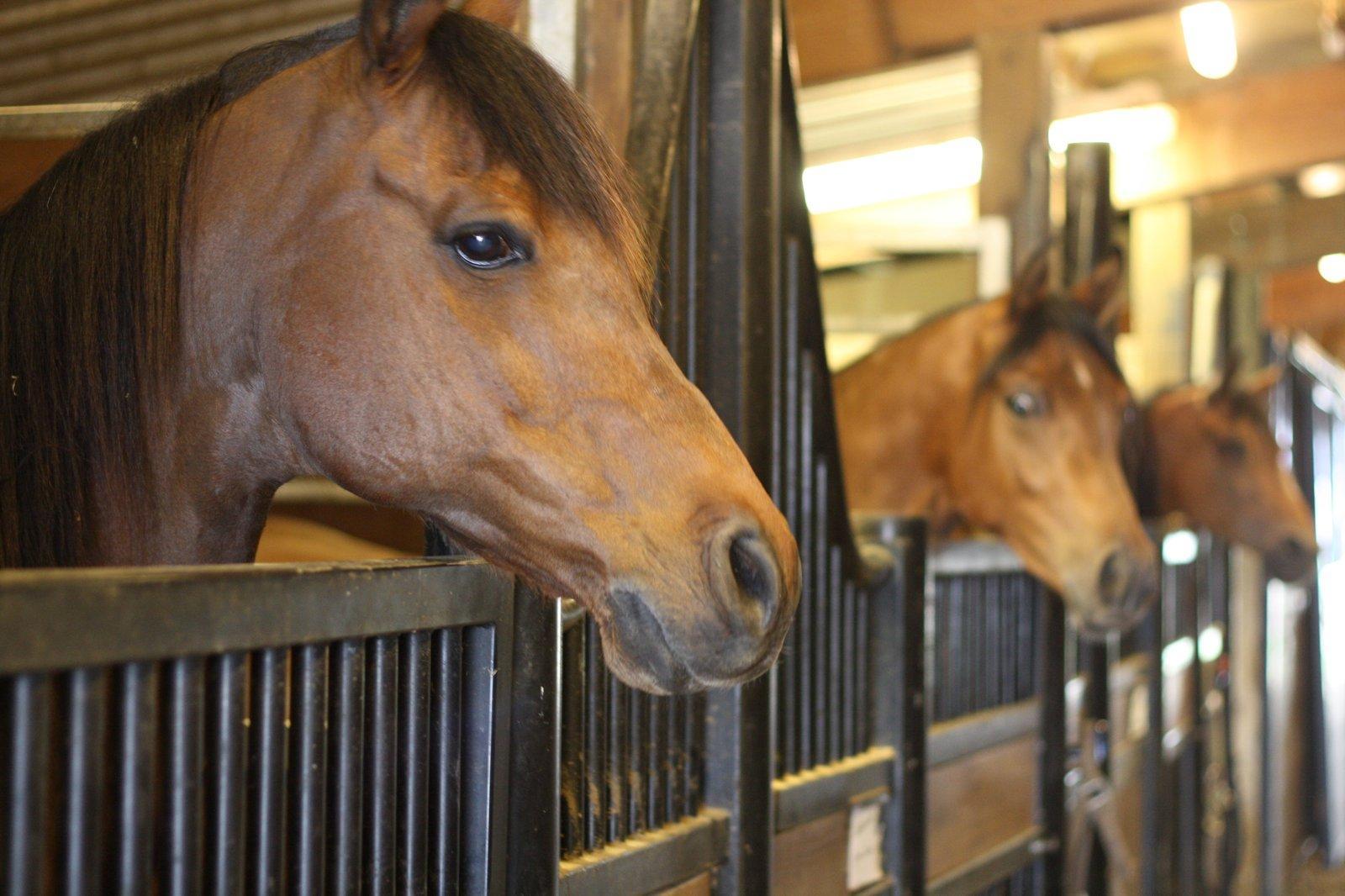 Как сделать кормушку для лошади фото 336