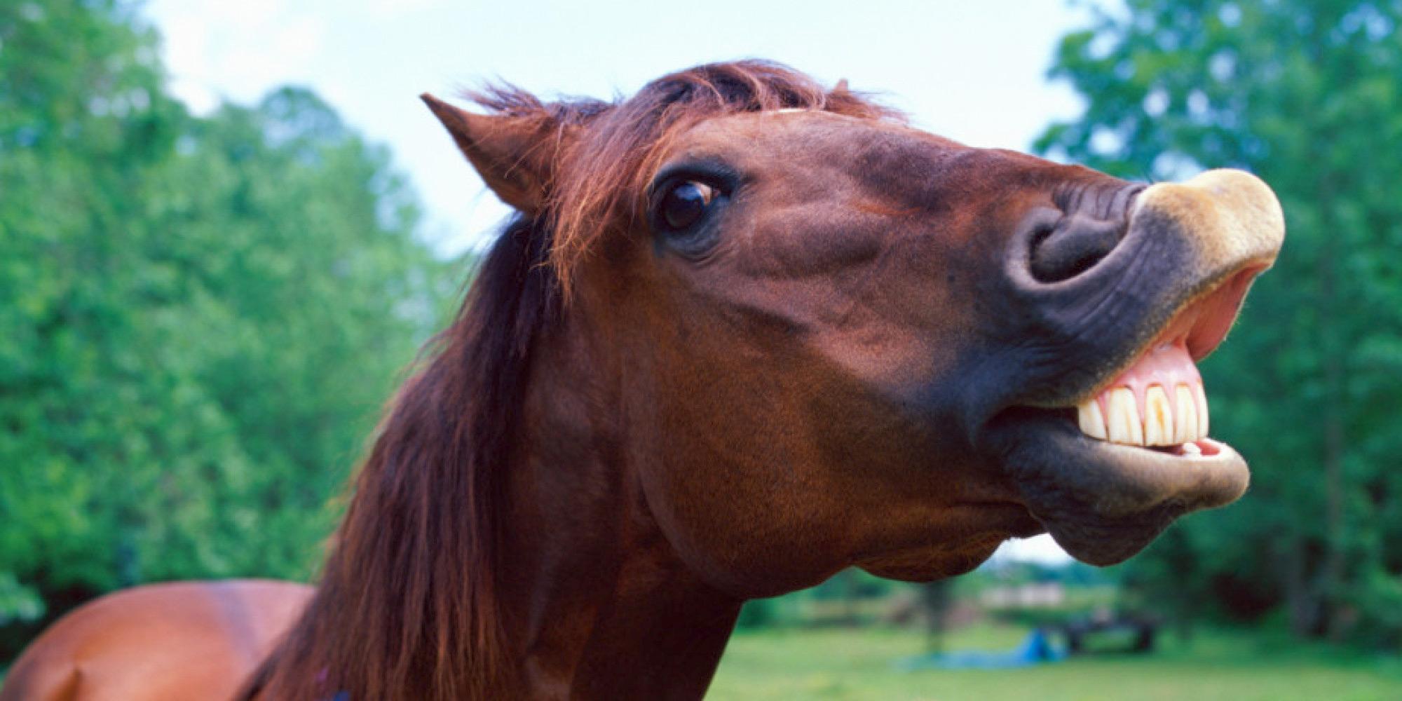 Стихи марта, картинка веселого коня