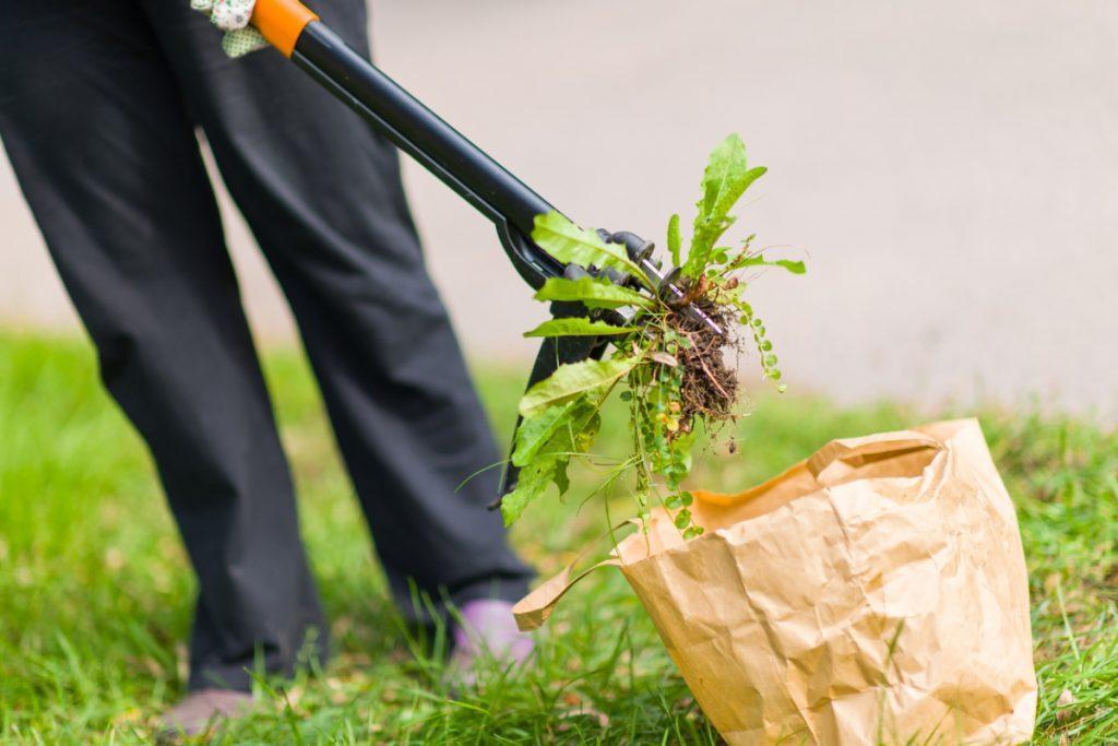 Портулак огородный как бороться способы химические средства