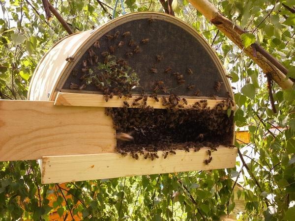 Об инвентаре для пчеловодства: оборудование для пасеки, электроножи, инструменты || Инструменты для пчеловода