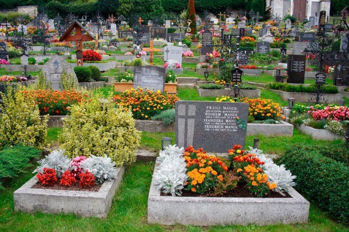 Что можно садить на кладбище