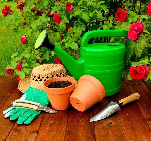 Как ухаживать за розами в домашних условиях