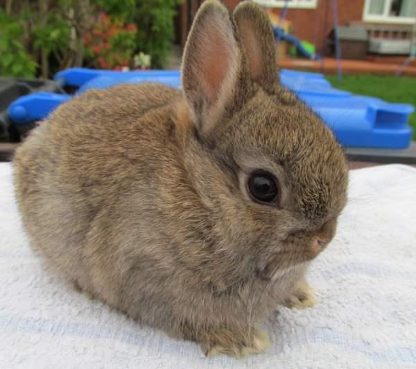 Декоративные кролики: уход и содержание в домашних условиях, породы