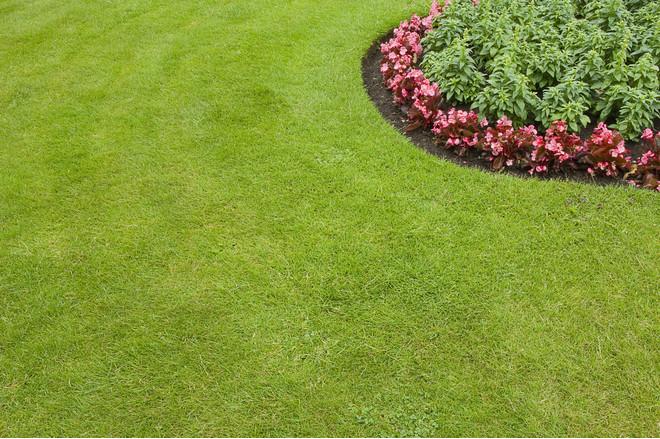 Как засеять газон на даче