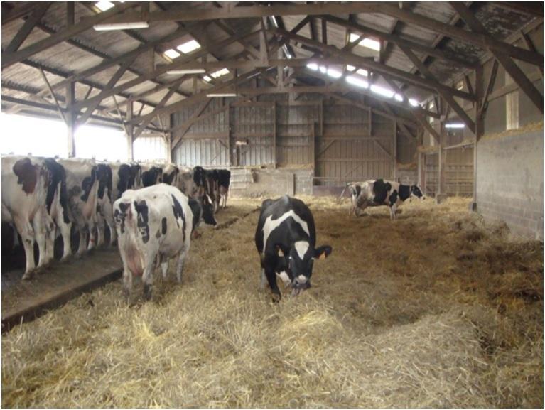 Копытная гниль у коров признаки и лечение