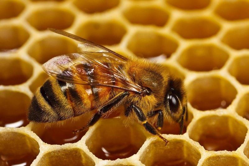 Из чего делают мед и как его добывают