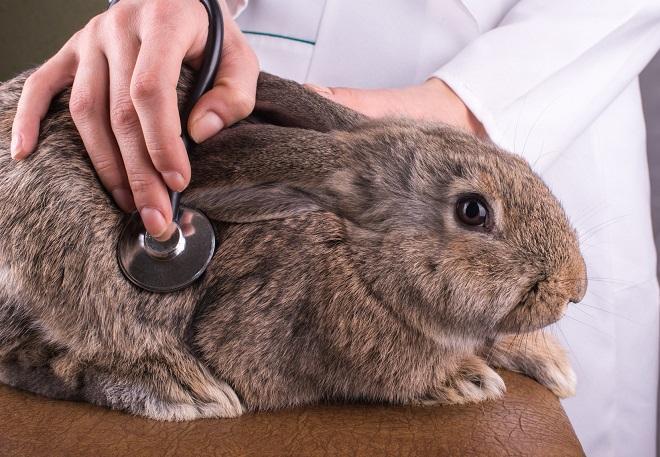 Марганцовка для кроликов
