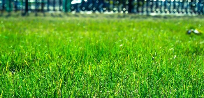 Как посеять газон на даче порядок выполнения работ подбор трав видео