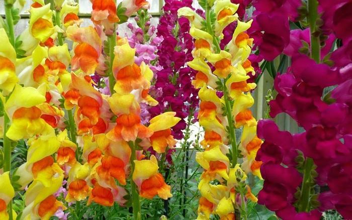 Подкормка гладиолусов летом правила выбора виды удобрений периодичность