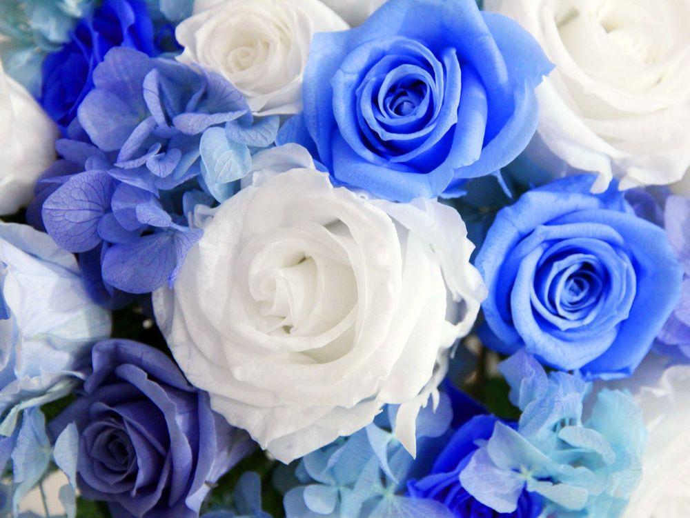 Картинки в сине голубом цвете
