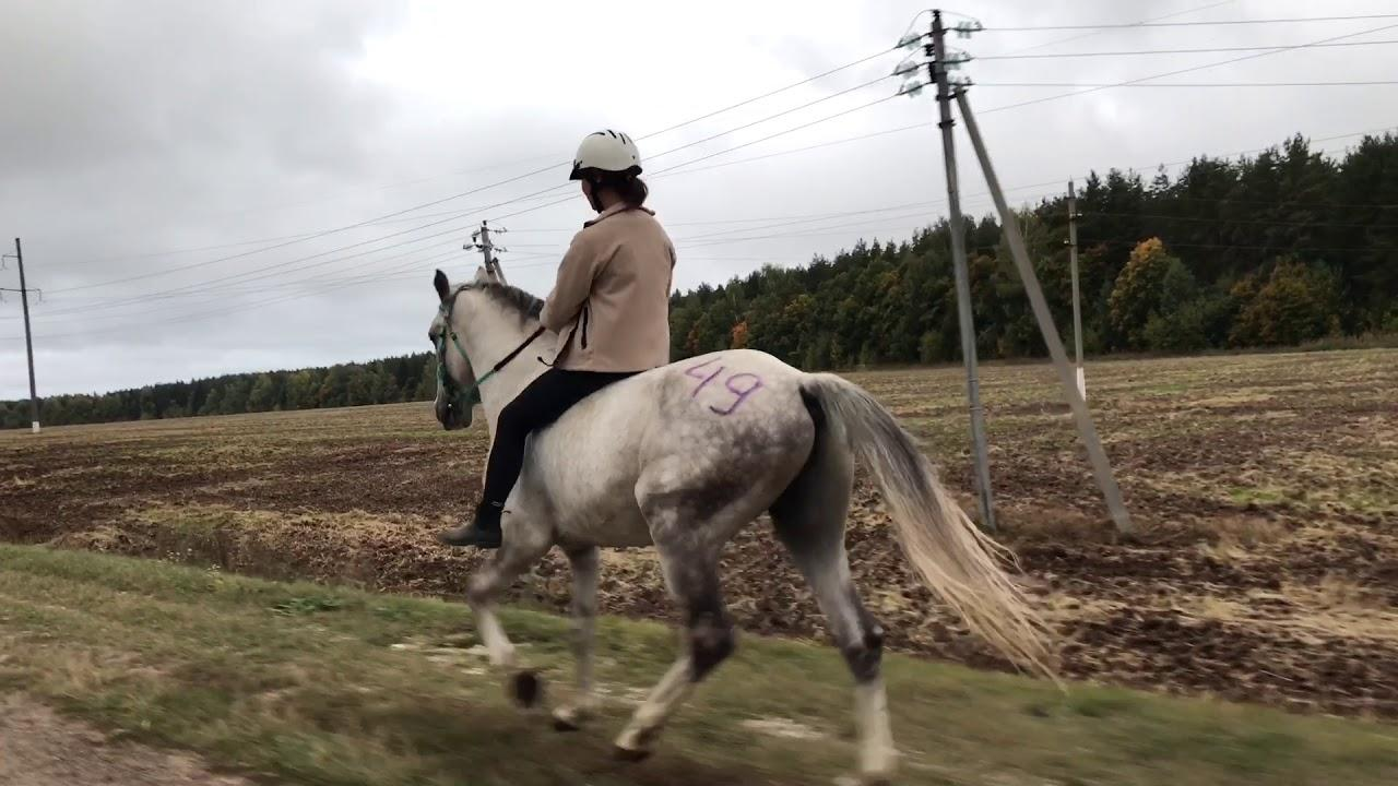 Аллюры лошадей – характеристики и виды 2019