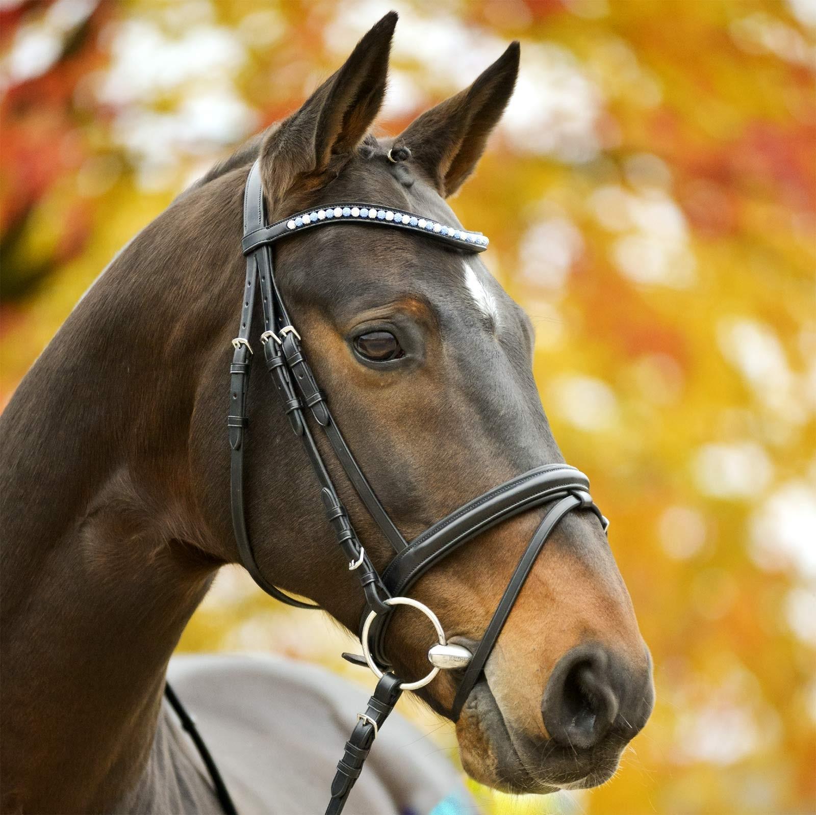 Уздечка для лошади своими руками фото 335