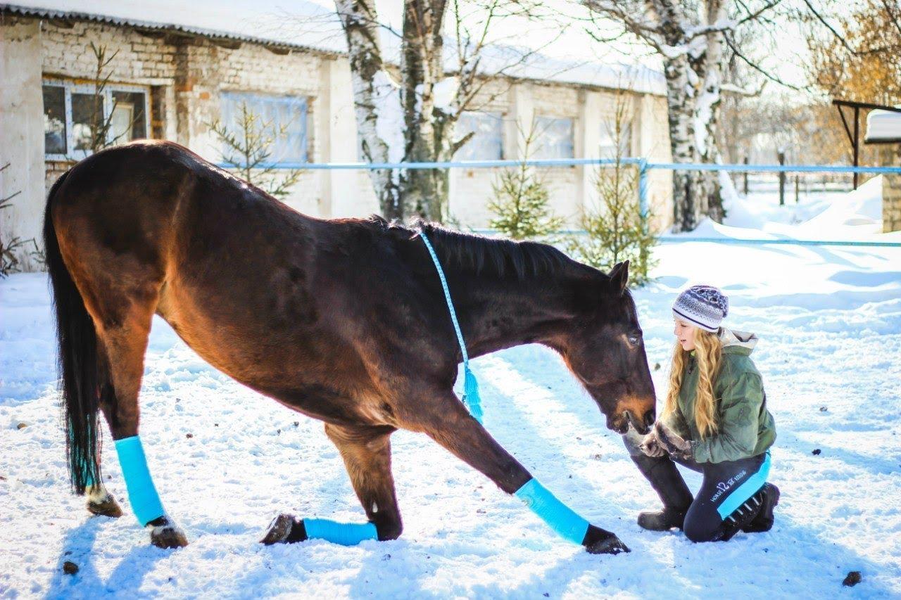Картинки как обучать лошадей