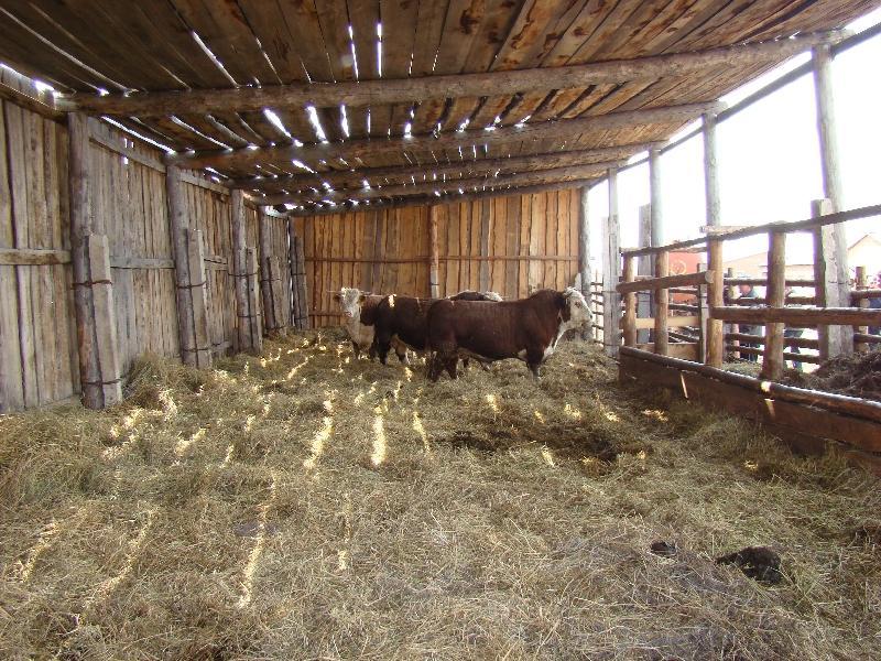 судейской лавочке картинки сараев для коров купить