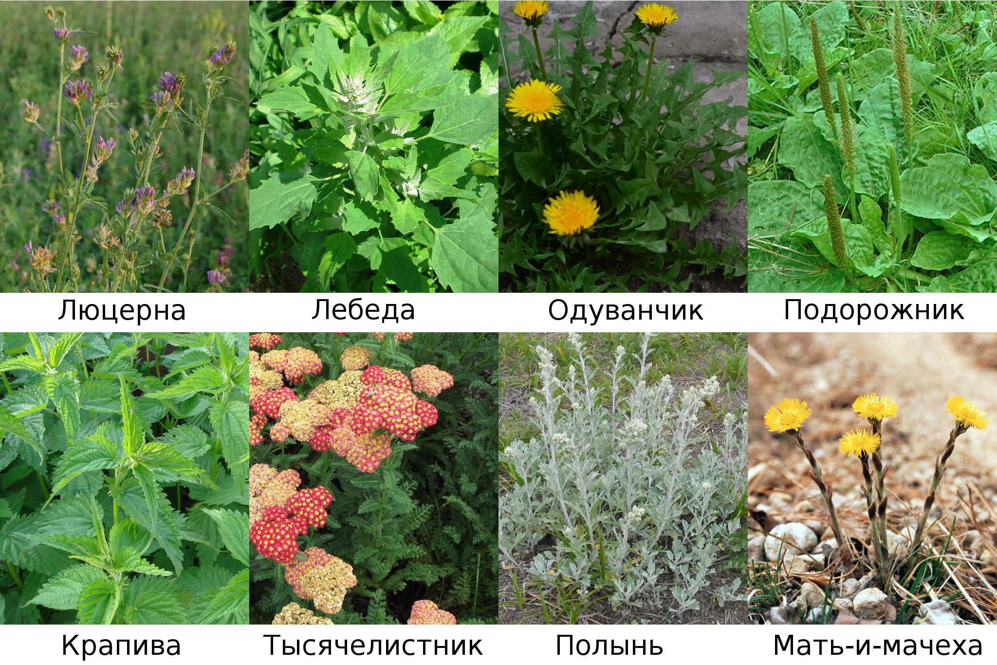 Птицы красноярского края картинки и названия птиц организациях