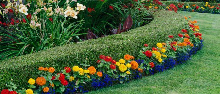 Схема клумбы из многолетников – как получить непрерывное цветение? Схемы посадки, дизайн и оформление клумбы или цветника (145 фото)