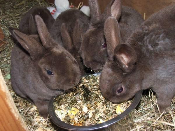 Лучший состав комбикорма для кроликов